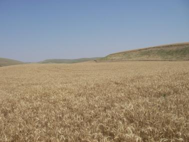 """<img src=""""ranches-for-sale-in-montana-acreage-for-sale-agricultural-land-for-sale-recreational-land-for-sale-blue-mountains-walla-walla-area-ground-farm.jpg""""title=""""Pataha Hunting Ranch for sale""""alt=""""Hunting ground for sale hunting ground for lease recreational land for lease recently sold dry land wheat farms for sale washington walla walla real estate farm broker agriculture blue mountains agent Oregon land for sale Idaho Montana Pacific Northwest"""">"""